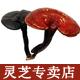 东方芝尔康logo