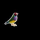 七彩鸟logo